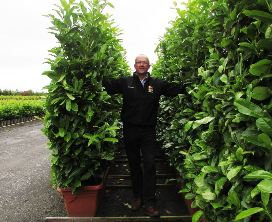 Tall Instant Hedge