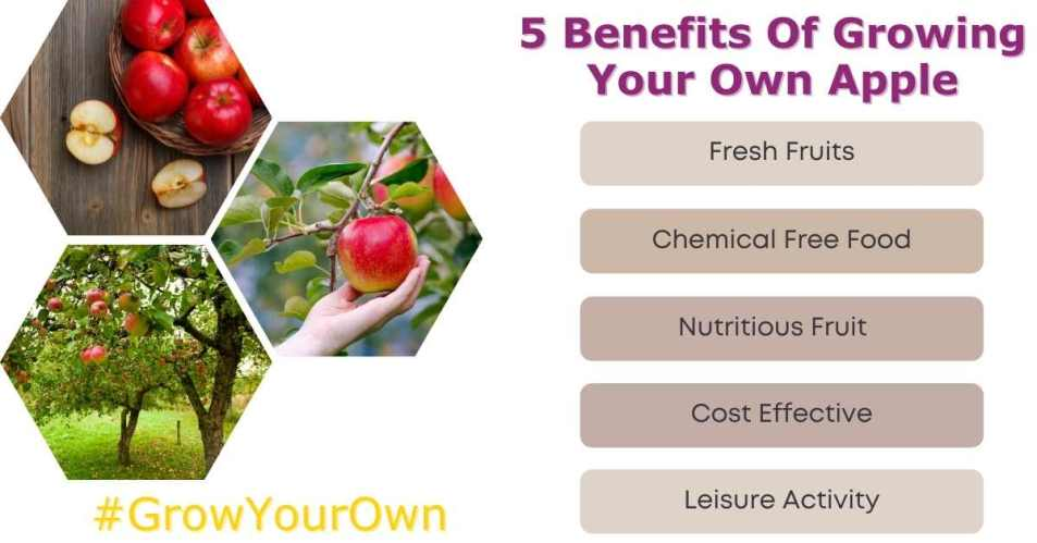 Benefits of growing your own apple - Gardening tips in Ireland   Grow your own