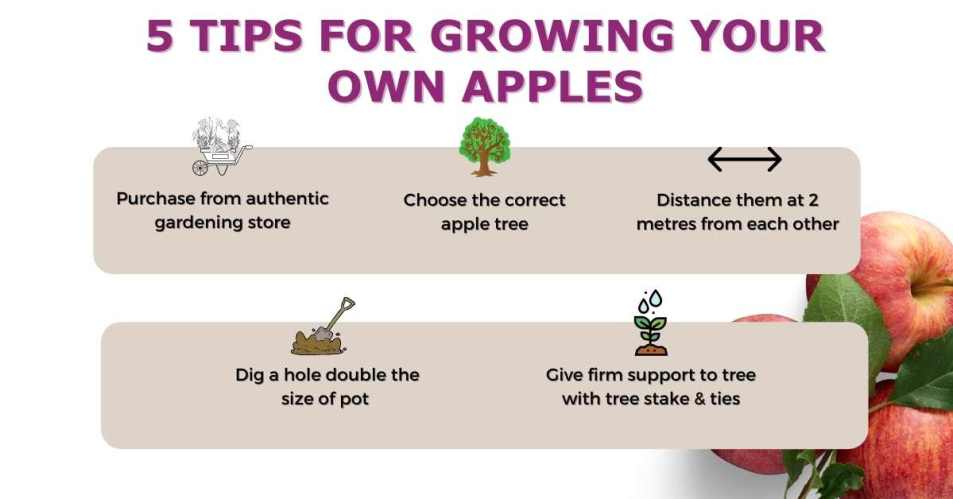 Tips to grow your own apples - Grow Your own Ireland   Gardening tips