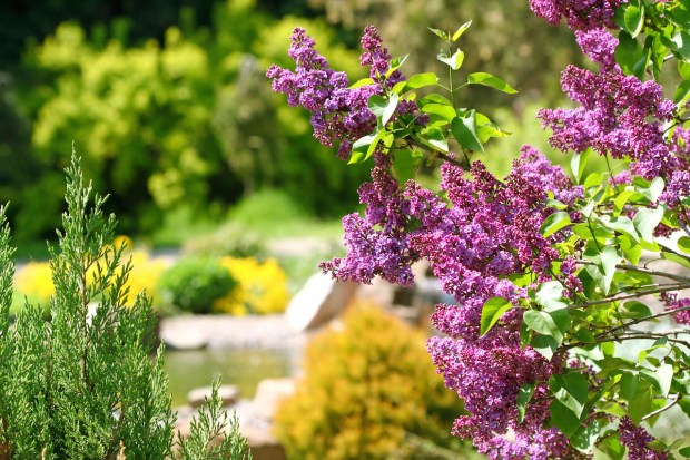 Best Botanical Gardens in the Northwest - HotelCoupons.com ...