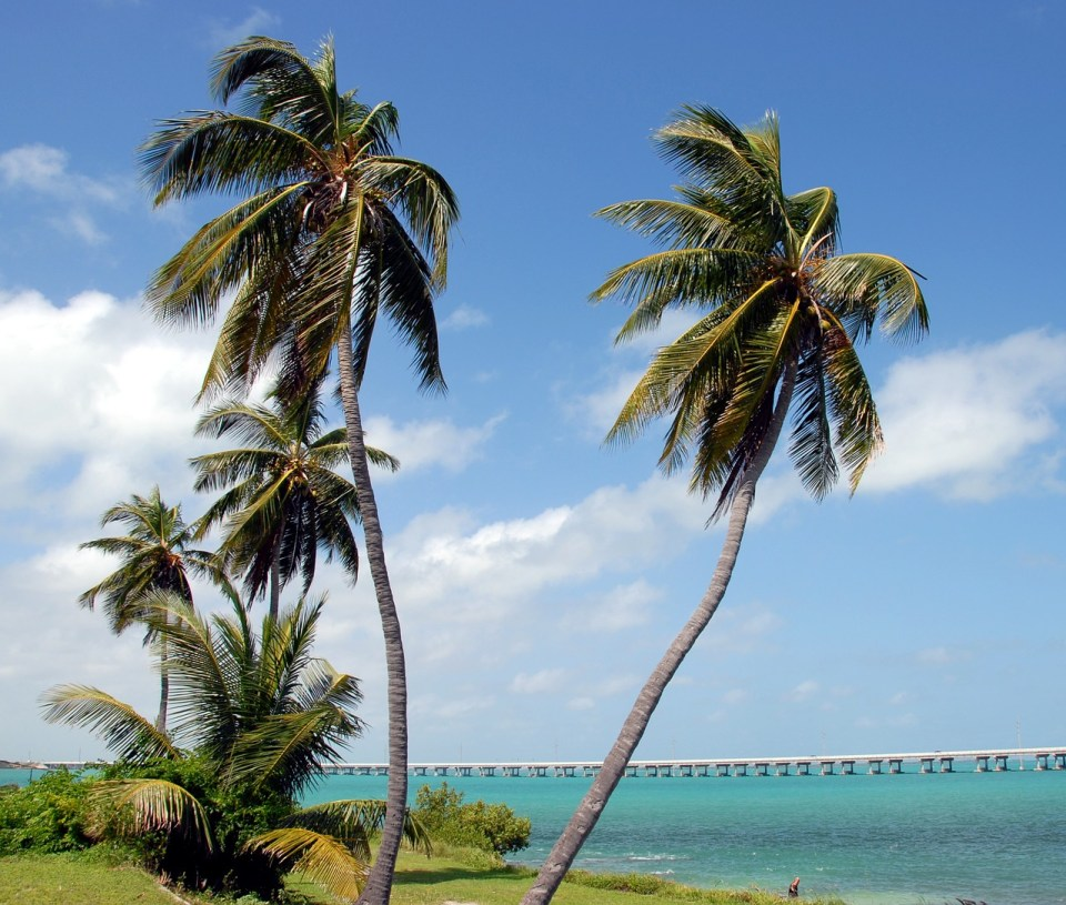palm trees and  grass with the ocean and pier in the background on Bahia Honda in Key West