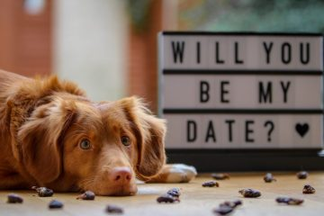 """Dog with head on floor and """"will you be my date?"""" sign in background."""