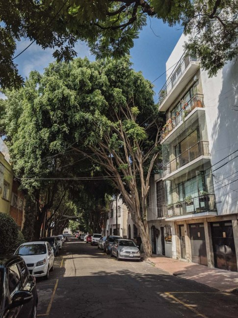 A small side street canopied by voluminous trees and a white apartment building.