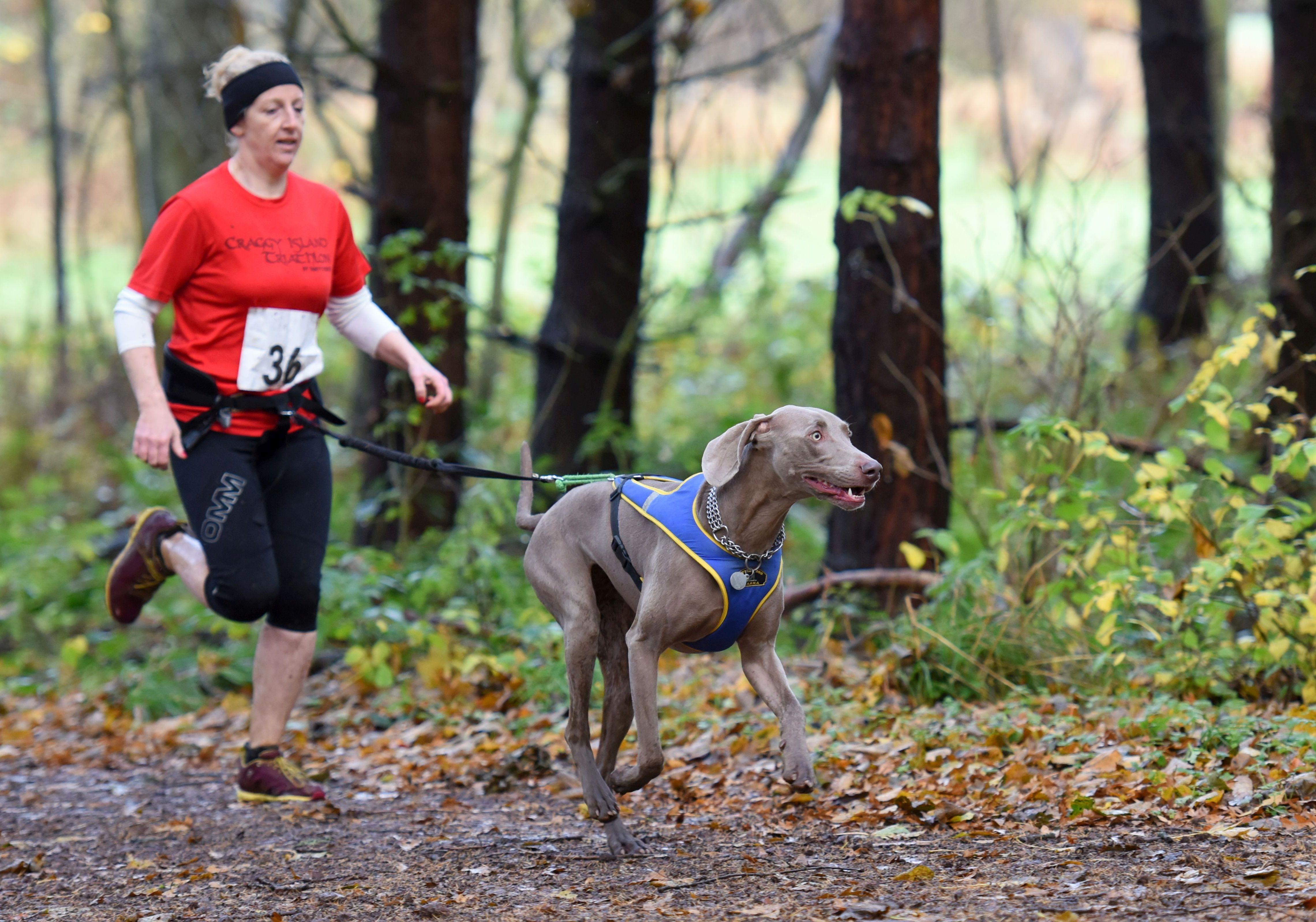 SLED DOG SPIRIT CANICROSS WOMENS BLACK COOL RUNNING TRAINING SHORTS CANI CROSS