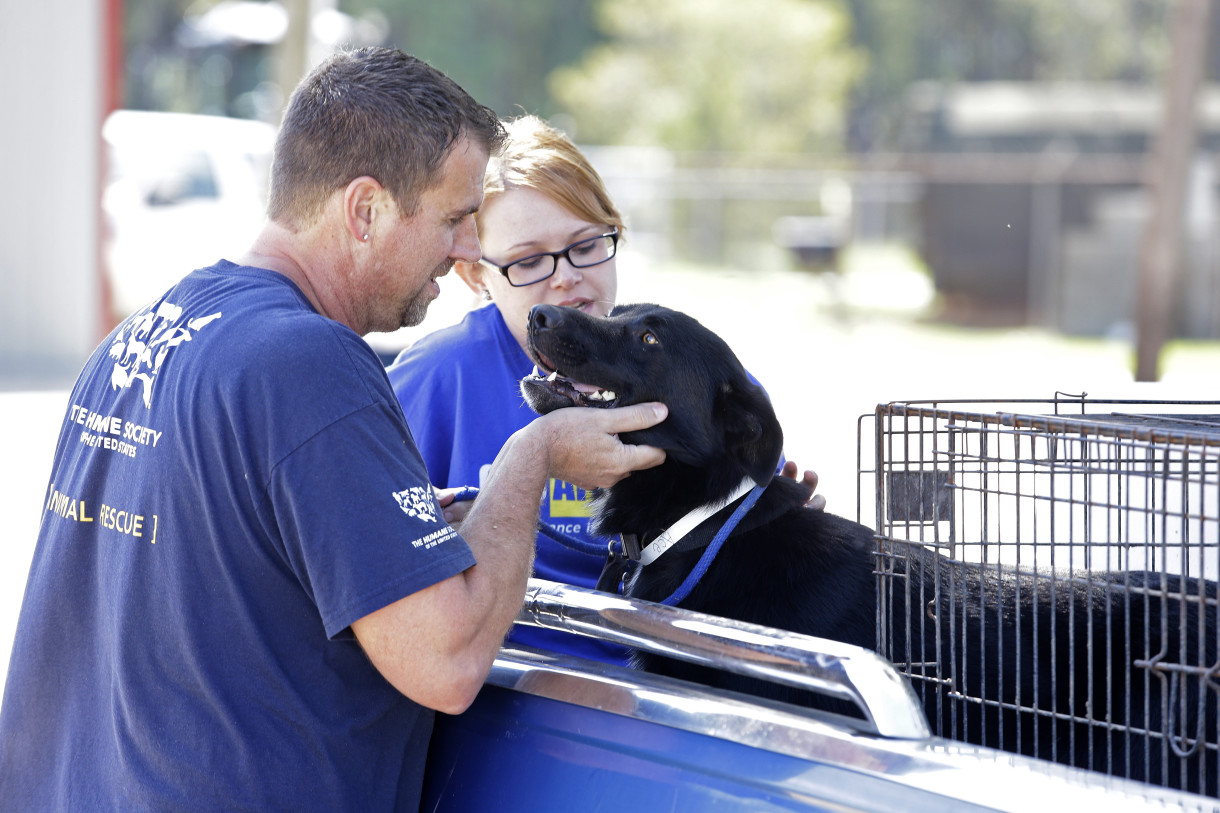 Helping People And Animals In Peril From Fires And Floods