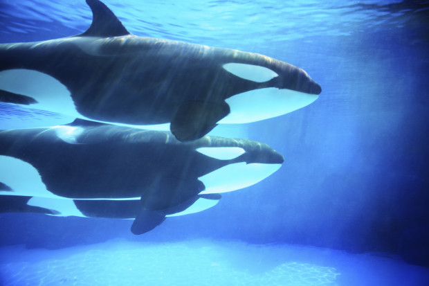 While The HSUS is committed to looking at the options that exist for captive animals, I want to encourage animal advocates to celebrate the major progress that SeaWorld has made.
