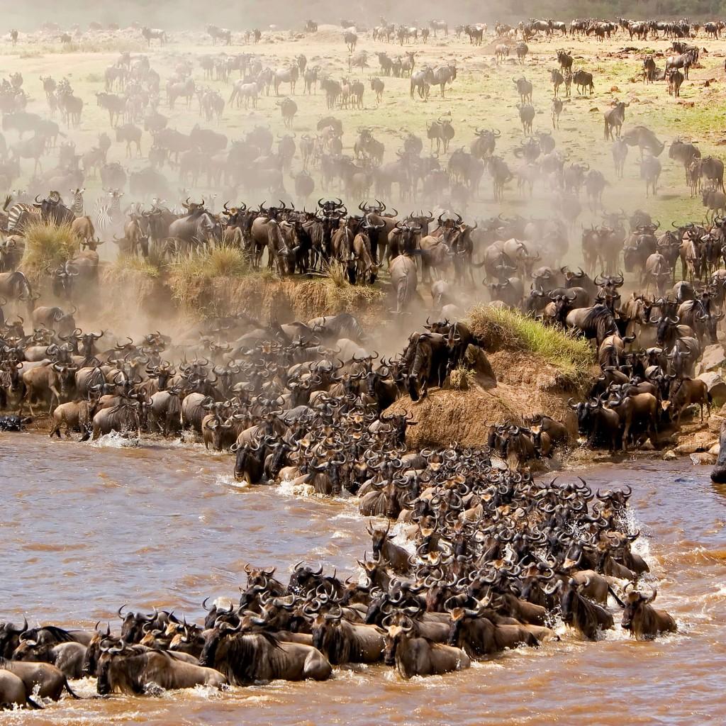 A impressionante migração de Gnus do Parque Masai Mara
