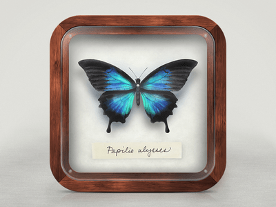 https://dribbble.com/shots/928066-Pinned-Butterfly-iOS-Icon