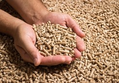 Wood pellets in male hands. Biofuels. Cat litter.