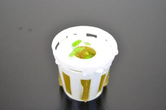 室内栽培アイティプランターで育てるワイルドストロベリーの苗