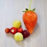 四季成りいちごの栽培方法