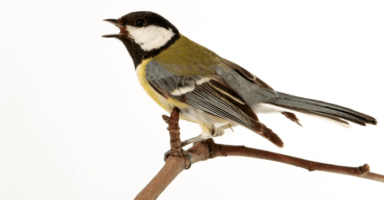 Why Bird Sounds Make Us More Productive