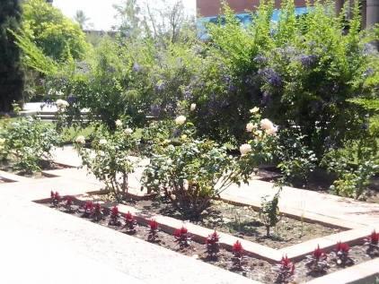 A memorial rose garden.
