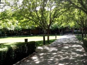 My favorite side of the building has a peaceful little lawn and many trees that keep the area cool in the summer.
