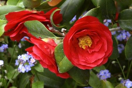 Image courtesy of Descanso Gardens