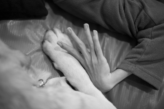 Interaction in between Cesar and Owen hands. Throughout the various therapies, it is posible to note the development of an emotional bond in which the child begins to make hand movements previously impossible to perform. Those movements helps him to slow the progression of the physical degeneration.