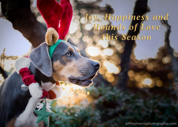Hounds of Love for the Holidays