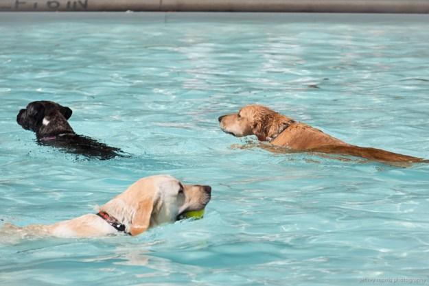 Dog Swim 7