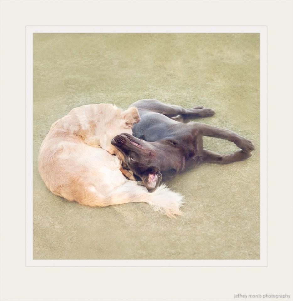 Cuddling Canine