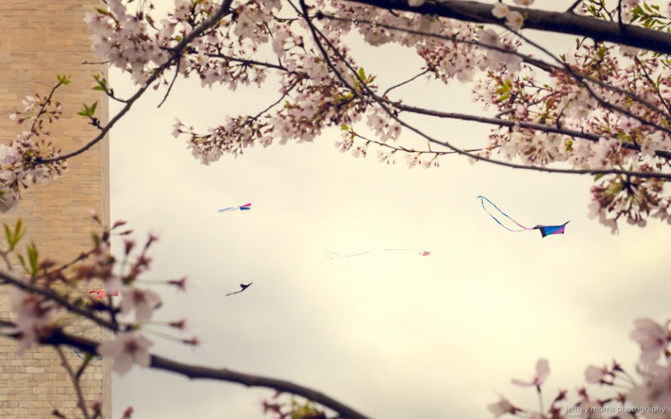 Blossoms and Kites