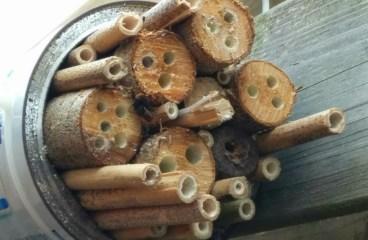 Bijenhuisje is bevolkt