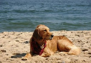 Jersey Shore Dog Friendly Beaches