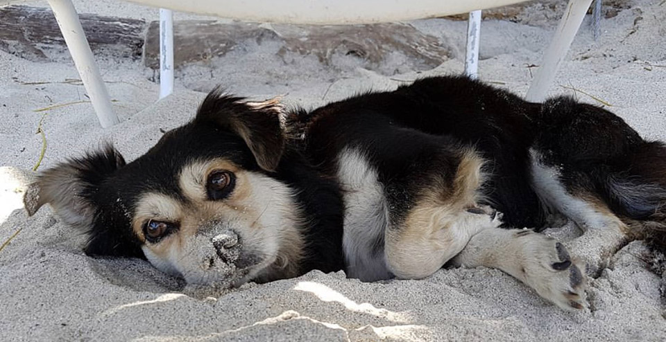 KODA Rescue Helps A New Jersey Family Turn Their Vacation Pet Into a Jersey Shore Resident
