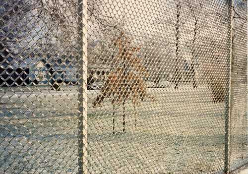 Chain link fence at Collett Park