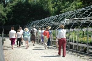 Greenhouse #4 - sun perennials