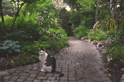 Henry in the Grotto Garden at dusk