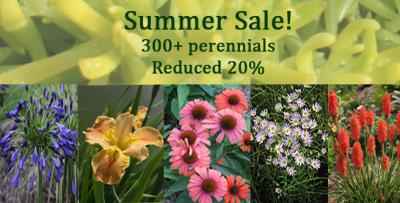Plant Delights Nursery 2014 Summer Sale