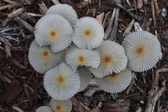 Fungus312