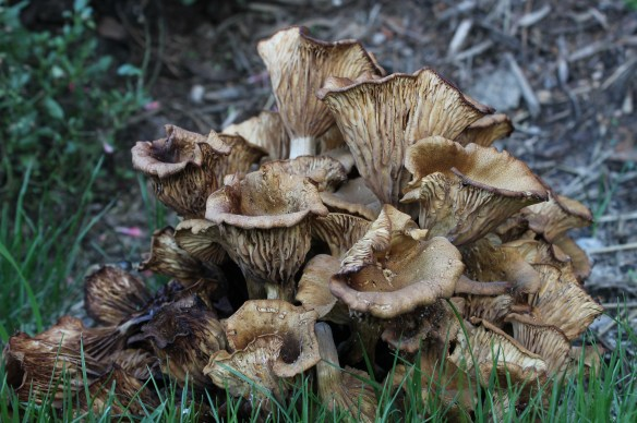 Fungus 133