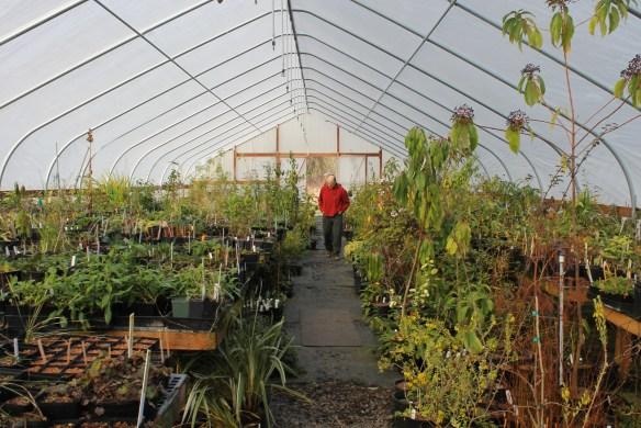 Dan Hinkley at Far Reaches greenhouse