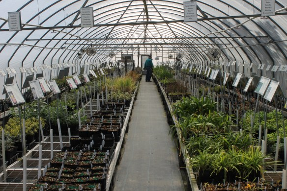 Greenhouse 4 at open house