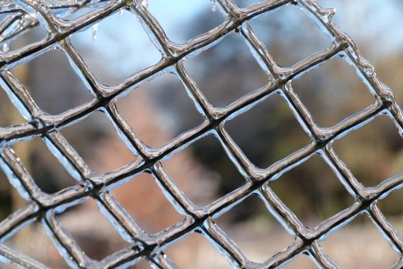 Deer fence in ice5