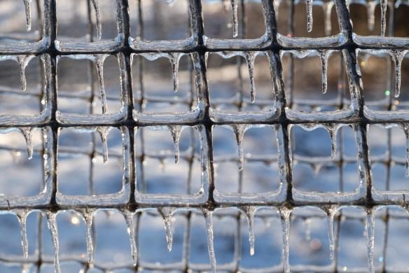 Deer fence in ice6