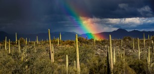 Organ Pipe National Monument and the Story of Park Ranger Kris Eggle