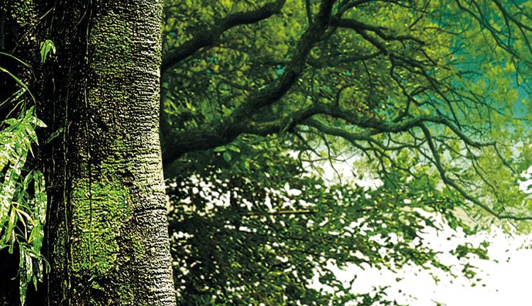Agronegócio, o negócio do Brasil sustentável