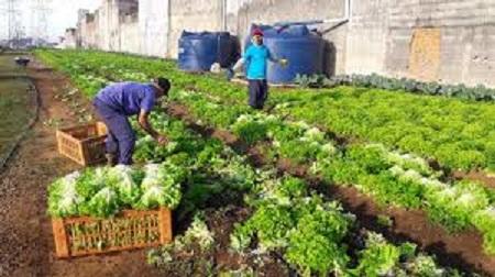 Agricultura urbana crescerá nas grandes metrópoles