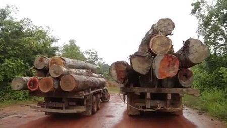 Apontar países receptadores do ilegal é um tiro no agronegócio brasileiro legal
