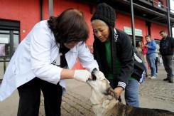 2006325337-cao-cachorro-pet-na-pan-cachorros-everson-bressansmcs