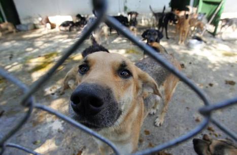 937596098-cachorro-cao-canil-agencia-estado