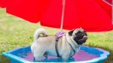 cachorro-calor-verao-quente-agura-refrescante