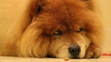 414169813-cachorro-cao-animal-pet-facebook