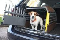 cachorro-carro-transporte