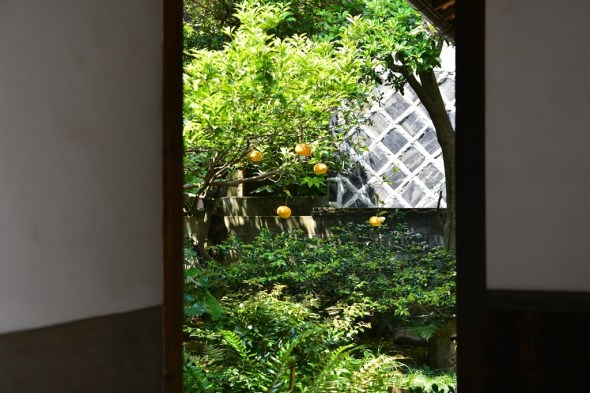 Garden with Orange trees