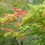 hokkaido autumn tour 15 422