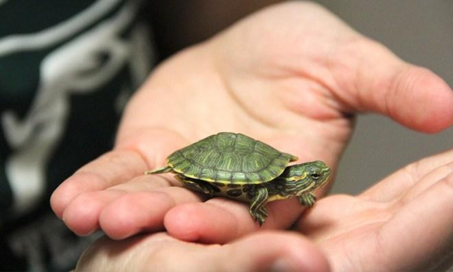 kaplumbağa akvaryumu nasıl olmalıdır