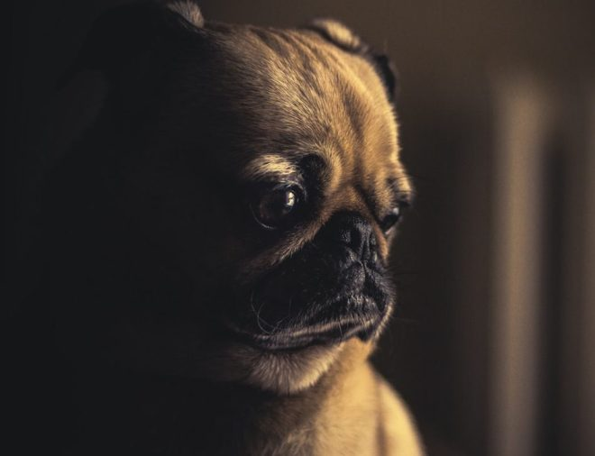 Köpeğimi Evde Kendim Eğitebilir Miyim ?